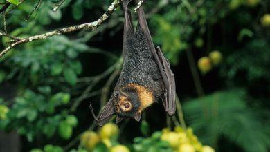 Photo of Deforestación pone en riesgo a murciélagos