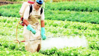 Photo of Agrotóxicos atentan contra salud de tierras agrícolas y pobladores