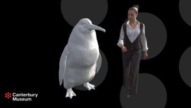 Photo of Hallan restos de un pingüino gigante