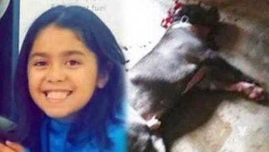 Photo of Niña muere tras ser atacada por tres perros pitbull
