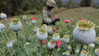 Photo of EU debe reducir consumo de drogas para frenar tráfico y violencia: SRE