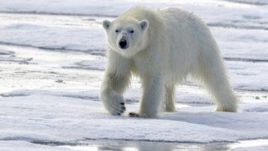 Photo of Tecnología ayuda a proteger animales de la extinción