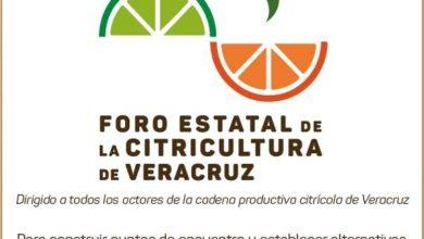Photo of Este 4 de diciembre, Foro Estatal de la Citricultura en Poza Rica: SEDARPA