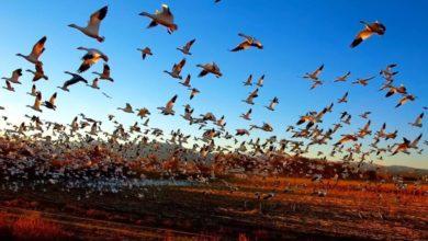 Photo of Cambio climático afecta migración de aves, revela investigación