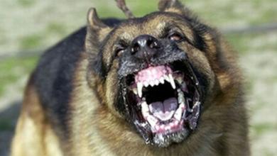 Photo of Reportero se queja porque perro lo mordió
