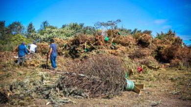 Photo of Inicia campaña Recicla tu Navidad 2020