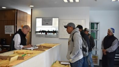 Photo of 600 jornaleros inician viaje a Canadá