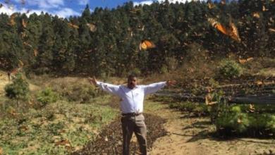 Photo of Hallan muerto a defensor de la mariposa monarca