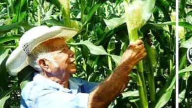 Photo of Solicita senador Madero apoyo para la producción de maíz