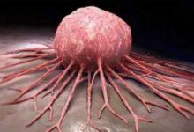 Photo of Descubren nueva célula que podría ser útil para terapia contra el cáncer