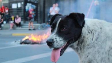 Photo of Marcha fake para llevar a perrito manifestante al doc