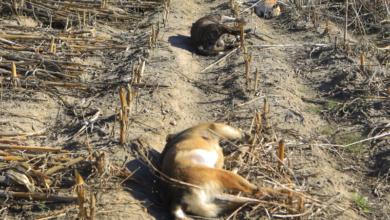Photo of Envenenamiento masivo de perros en Puebla