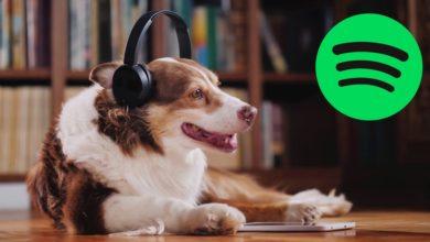 Photo of Spotify lanza podcast para que los perros no se sientan solos en casa