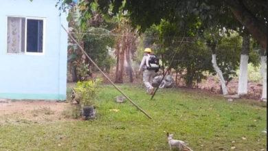 Photo of Combate SS al mosquito del dengue en Hueyapan