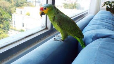 Photo of Perico recibe 'alas' nuevas luego de que su dueño se las cortara