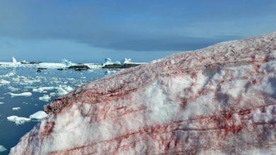 Photo of Viralizan impresionantes imágenes de nieve roja en la Antártida