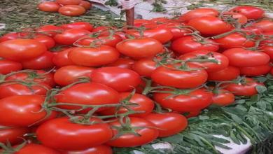 Photo of Heladas provocan alza de jitomate y tomate