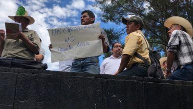 Photo of Emigran cafeticultores de Veracruz en busca de empleo