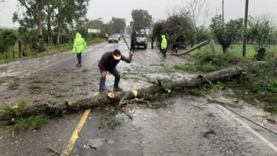 Photo of Caída de árboles y espectaculares daños que dejó el FF 41