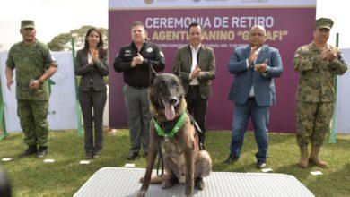 Photo of Perro policía se retira con honores de la SSP