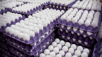 Photo of Regulan precio del cono de huevo