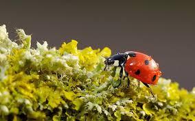 Photo of Insectos y musgos resisten a la pérdida de biodiversidad