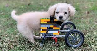 Photo of Niño hace silla de ruedas con piezas de legos para perrita discapacitada