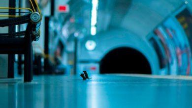 Photo of Fotografía de pelea entre dos ratones obtiene título de la mejor del año