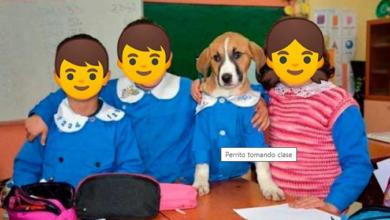 Photo of Adoptan a perrito para darle clases en escuela de Turquía
