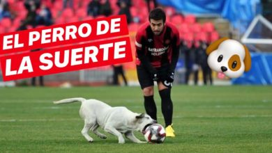 Photo of Perrito futbolista interrumpe partido en Turquía