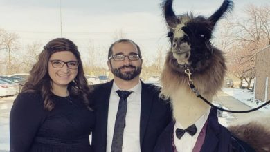 Photo of Chico lleva una llama como su invitada a la boda de su hermana