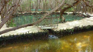 Photo of Parque ecológico de Yucatán es cerrado por coronavirus