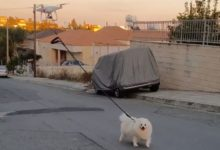 Photo of Hombre pasea a su perro con ayuda de un drone por el Covid-19 #Video