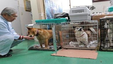 Photo of Japón registra récord histórico de denuncias por maltrato animal