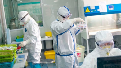 Photo of Oficial: El Coronavirus proviene de un animal