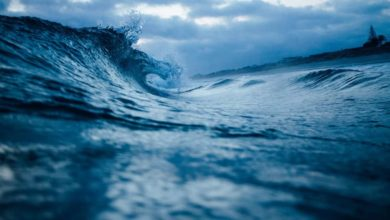 Photo of Invitan a descubrir el océano sin salir de casa