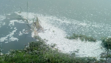 Photo of Alertan por mortandad de peces en laguna del Castillo