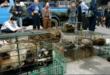 Photo of Casi 100 por ciento de asiáticos apoya regular comercio de vida salvaje