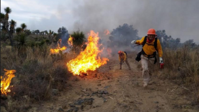 Photo of Multas por provocar incendios forestales pueden ascender hasta 2 mdp
