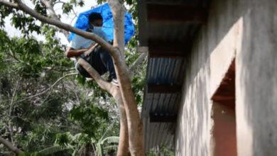 Photo of Estudiante sin internet se sube a un árbol para tomar sus clases en línea