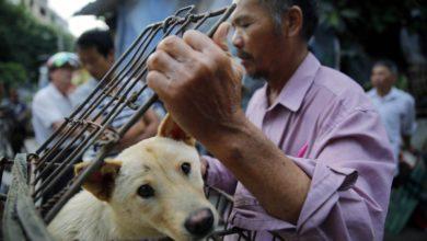 Photo of Shenzhen en China prohíbe consumir carne de perro y gato