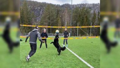 Photo of El espectacular perro que juega voleibol y acomoda remates #Video