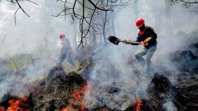Photo of Suman 43 incendios forestales en 16 estados; afectan 7.5 mil hectáreas