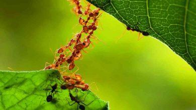 Photo of Incautan hormigas cazadoras y rescatan animales silvestres en Bogotá
