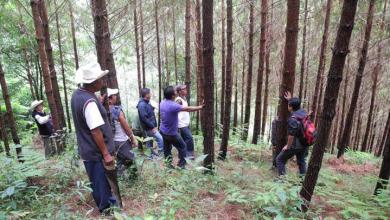 Photo of Organizaciones civiles impulsan iniciativa para proteger los bosques