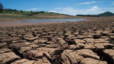 Photo of Causarán sequías y olas de calor mortandad masiva de árboles