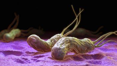 Photo of Desarrollan tratamiento contra infecciones de Helicobacter pylori