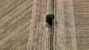 Photo of Visibilizan sequía de República Checa desde el espacio