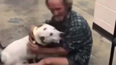 Photo of Indigente se reencuentra con su perro y se vuelve viral #Video