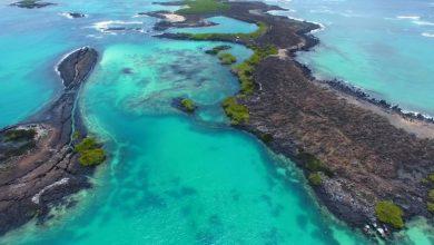 Photo of Estudiarán en Islas Galápagos impacto de turismo en el ambiente